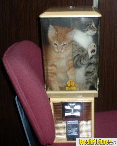 Kitty-vending-machine